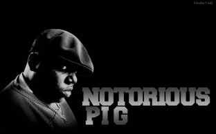 notorious-pig-5393